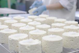 カマンベールチーズを作る工程写真の写真素材 [FYI02675441]