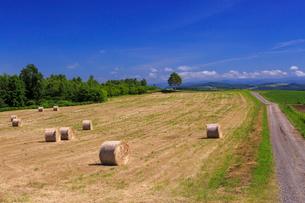 麦わらロール転がる美瑛の丘の写真素材 [FYI02675453]
