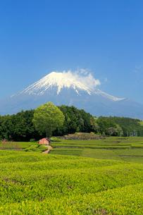 富士山と茶畑の写真素材 [FYI02675542]