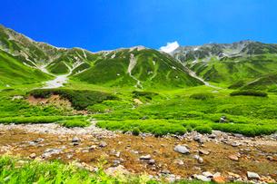 夏の立山連峰・花咲く浄土沢の清流の写真素材 [FYI02675633]