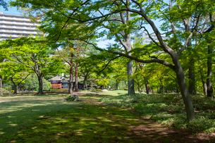 殿ヶ谷戸庭園の春の風景の写真素材 [FYI02675719]