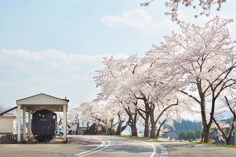 JR会津柳津駅前の桜並木の写真素材 [FYI02675730]
