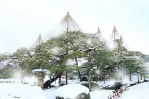 冬の金沢兼六園 月見灯籠とマツに降る雪の写真素材 [FYI02675757]