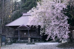 福島会津薬王寺の桜の写真素材 [FYI02675808]