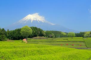 富士山と茶畑の写真素材 [FYI02675834]