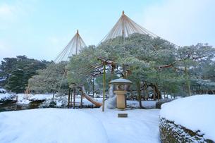 冬の金沢兼六園・月見灯籠に松の雪吊りの写真素材 [FYI02675836]