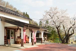JR会津柳津駅前の桜並木の写真素材 [FYI02675839]