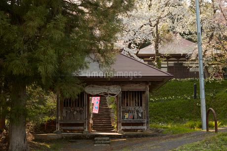 福島会津薬王寺の桜の写真素材 [FYI02675877]
