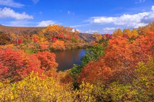 錦秋の大雪高原温泉の写真素材 [FYI02675881]