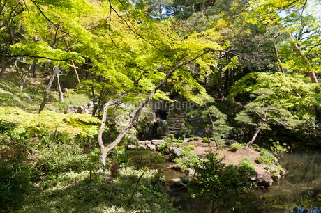 殿ケ谷戸庭園の写真素材 [FYI02675884]