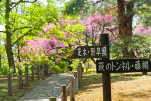 殿ケ谷戸庭園の写真素材 [FYI02675897]