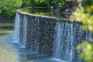 武蔵国分寺公園の水辺の風景の写真素材 [FYI02675913]