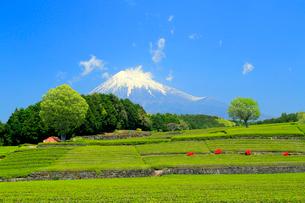 富士山と茶畑の写真素材 [FYI02675943]