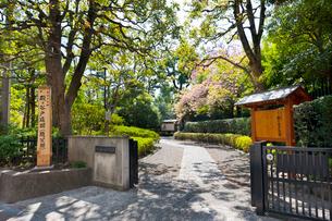 殿ヶ谷戸庭園の春の風景の写真素材 [FYI02675944]