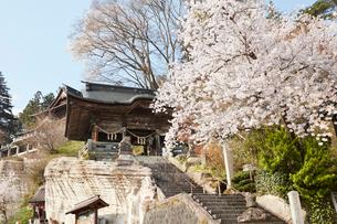 福満虚空菩薩圓藏寺と桜の写真素材 [FYI02675959]