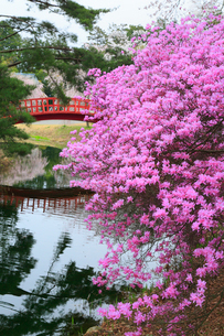 馬見塚公園のツツジと橋の写真素材 [FYI02675994]