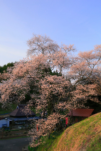 岩井畝の大桜の写真素材 [FYI02676020]