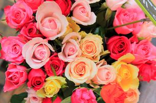 バラの花束の写真素材 [FYI02676022]