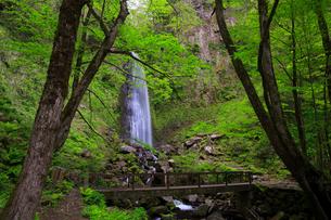 雨滝と新緑の写真素材 [FYI02676023]