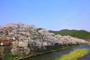 美甘宿場桜の写真素材 [FYI02676044]