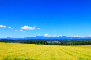 麓郷の森展望台から望む麦畑・富良野市街・夕張山地の写真素材 [FYI02676060]