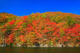 太平湖の紅葉の写真素材 [FYI02676090]