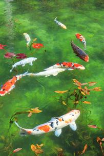モネが描いた絵のような池の写真素材 [FYI02676208]