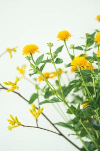 夏らしい黄色い小花のアレンジメントの写真素材 [FYI02676275]