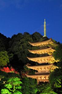 瑠璃光寺の紅葉 ライトアップ夜景の写真素材 [FYI02676276]