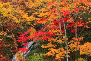 三段の滝の紅葉の写真素材 [FYI02676292]