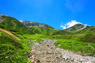高山植物の花咲く夏の立山・浄土沢の写真素材 [FYI02676315]