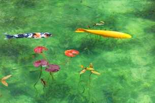 モネが描いた絵のような池の写真素材 [FYI02676324]