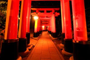 伏見稲荷大社・鳥居ライトアップ夜景の写真素材 [FYI02676331]