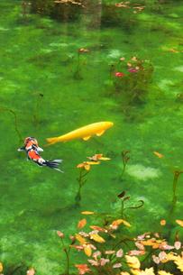 モネが描いた絵のような池の写真素材 [FYI02676353]