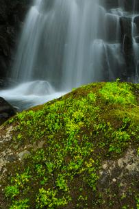 筥滝と新緑の写真素材 [FYI02676357]