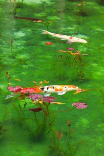 モネが描いた絵のような池の写真素材 [FYI02676361]