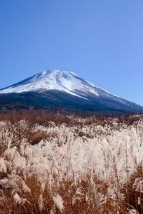 富士山腹より望むススキと富士山の写真素材 [FYI02676362]