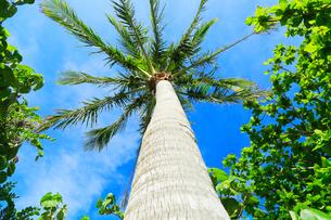 ヤシの木と空の写真素材 [FYI02676387]