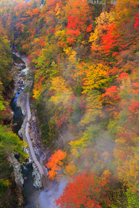 子安峡の大噴湯と紅葉の写真素材 [FYI02676413]