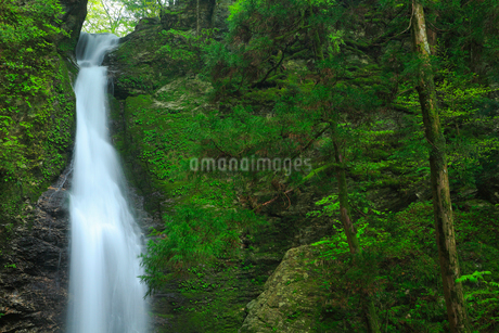 龍王の滝の写真素材 [FYI02676428]