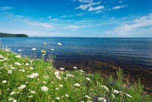 サロマ湖と野の花の写真素材 [FYI02676439]