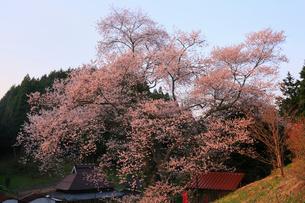 岩井畝の大桜の写真素材 [FYI02676455]