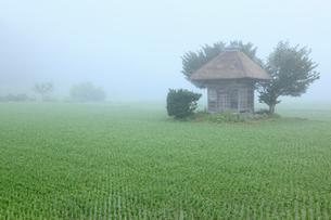 遠野の里 中村の御堂(荒神神社)の写真素材 [FYI02676482]
