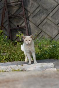 前を見つめる猫の写真素材 [FYI02676550]
