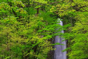 雨滝と新緑の写真素材 [FYI02676553]