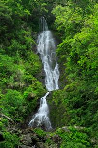 奄美大島 フナンギョの滝の写真素材 [FYI02676581]