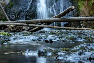シルバーフォールズ州立公園内の大滝と大木の写真素材 [FYI02676662]