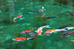 モネが描いた絵のような池の写真素材 [FYI02676681]