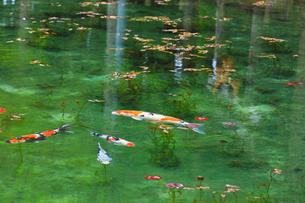 モネが描いた絵のような池の写真素材 [FYI02676753]