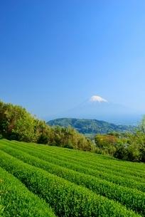 静岡県 富士市の茶畑と富士山の写真素材 [FYI02676803]